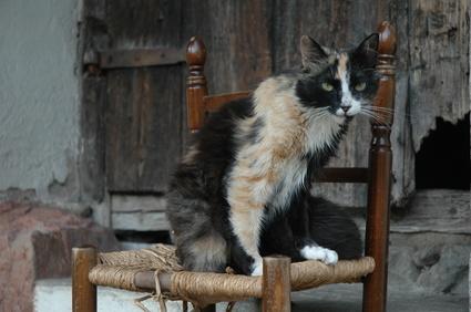 Linsuffisance Rénale Chronique Chez Le Chien Et Le Chat