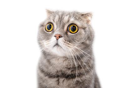 mon chat a les yeux qui coulent fiches conseils. Black Bedroom Furniture Sets. Home Design Ideas