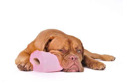 la chimioth rapie pour nos animaux de compagnie fiches conseils. Black Bedroom Furniture Sets. Home Design Ideas